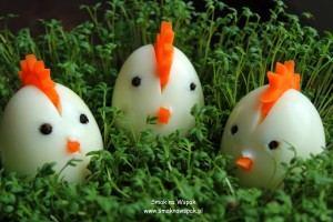 Kurczaczki z jajek na twardo.